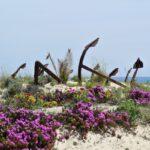 Anchor cemetery in Barril Beach Tavira