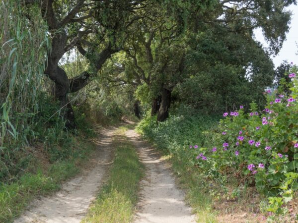 Vicentina Route - countryside